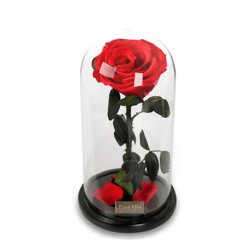Para Ella Консервированный свежий цветок роз с павшими лепестками в стекле Dome на деревянной базе в качестве подарка для любовника, День святог