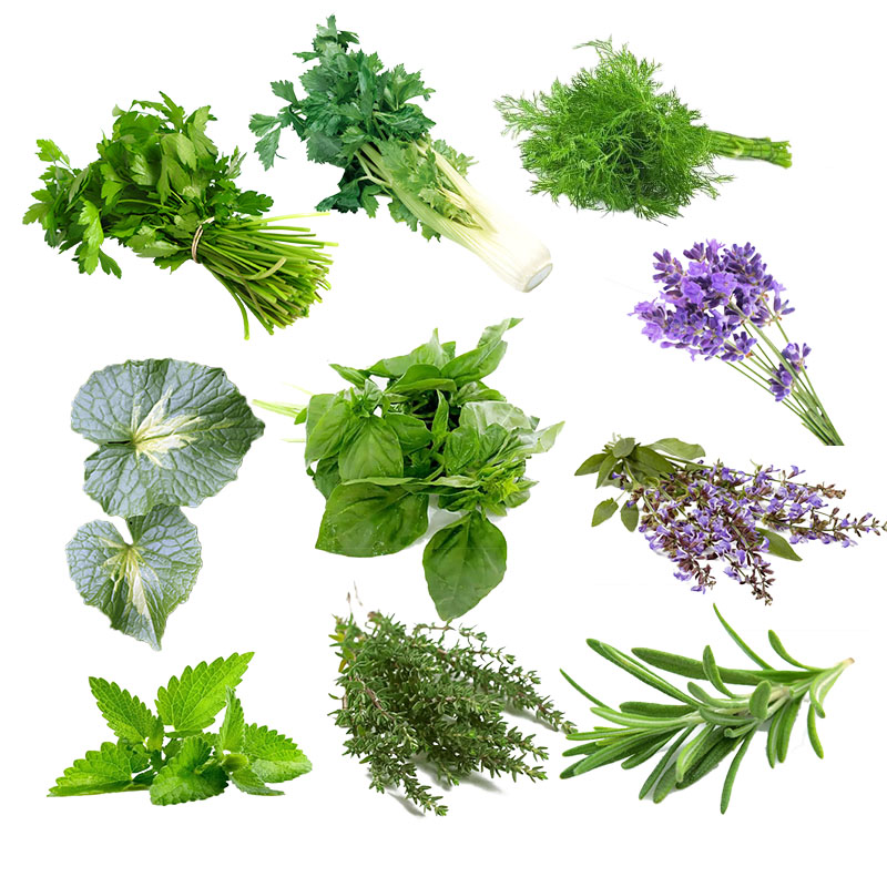 Egrow 10 Varieties Mixed Spice Vegetable Seeds Spice Combo Mix Flower Seeds Herb Plants Seeds