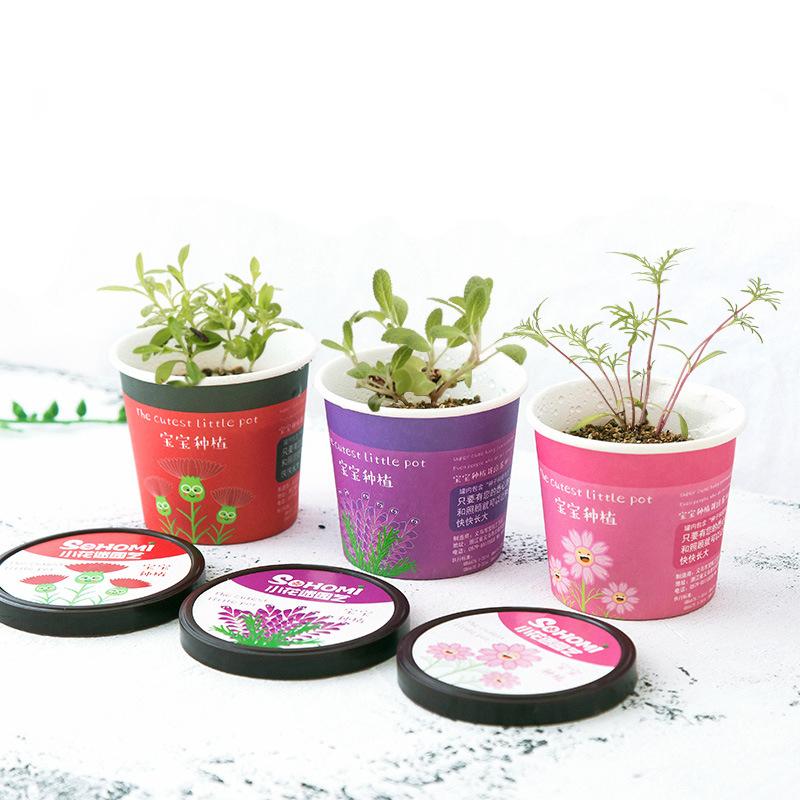 Creative Micro Landscape Mini Cute Little Flower Pot DIY Small Bonsai Plantas Ecological Plant Seeds For Home Garden Decor
