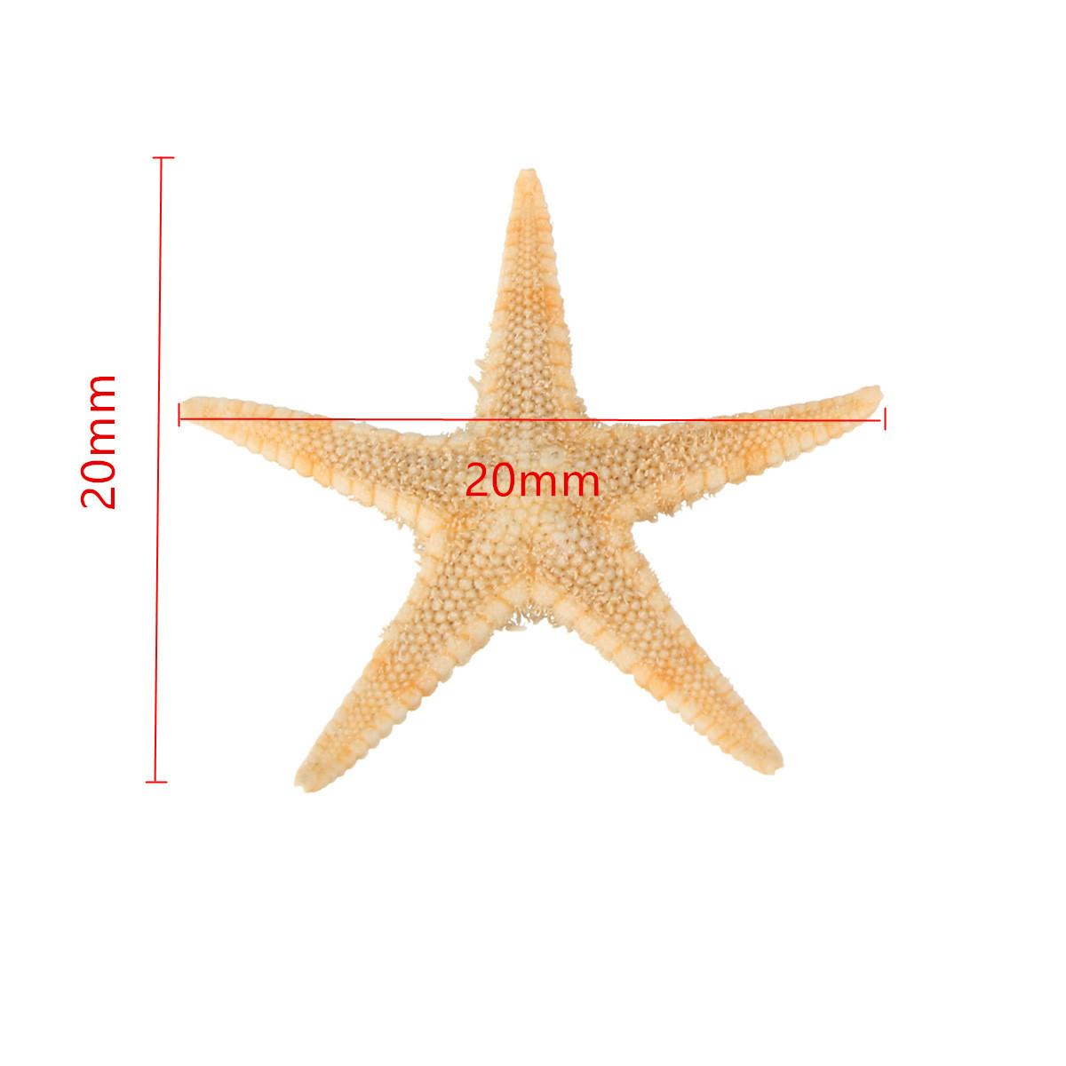 20pcs Mini Starfish Sea Star