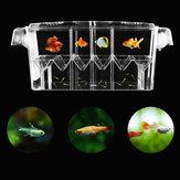 10.6inch Аквариум Бак прозрачный изолирующий инкубатор для выращивания рыб