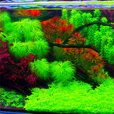 Egrow 1000 PCS Aquarium Graines de Plantes Pin Arbre Semillas Raras Plantas Aquatique Poisson Réservoir Décoration Arbres Graines