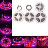 0.5M / 1M / 2M / 3M / 4M / 5M SMD5050 Rot: Blau 3: 1 Vollspektrum LED Grow Strip Light Plant Lamp