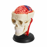 4D MASTER DIY Puzzle STEM 39pcs Assembly Skull Brain Neuroanatomical Medical Model Toy
