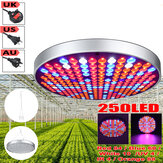 Full Spectrum 250LED Grow Light UV Growing Lamp for Indoor Vegetable Flower Hydroponic AC85-265V