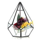 Pianta grassa triangolo d'inverno terrario fai da te micro paesaggio bottiglia di vetro