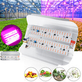 50W 100W Full Spectrum COB LED Grow Light Veg Plant Flower Flood Lamp for Indoor Use AC220V