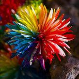 Egrow 20Pcs Rainbow Chrysant Bloem Zaden Zeldzame Kleur Huis Tuin Bonsai Verven Plant