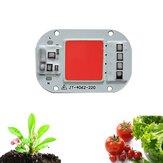 LUSTREON AC160-260V 20W 30W 50W Full Spectrum COB LED Grow Light Chip do kwiatów roślin wewnętrznych