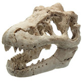 Dragon Resin Aquarium Decoration Crocodile Skull Voor Aquarium Hars Ornament