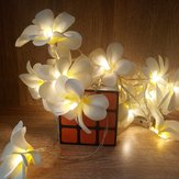 Bateria Powered 3M 5M Frangipani Shaped Warm White Fairy String Light para Festa de Natal