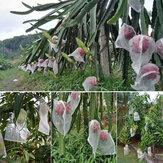 50 pièces plante fruits protéger cordon maille filet sac jardin serre plante couverture fruits Protection jardin accessoires