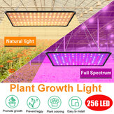 5000W LED Full Spectrum Plant UV Grow Light Veg Lamp For Indoor Hydroponic Plant