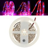 DC12V Red:Blue 3:1 4:1 5:1 5M SMD5050 Non-Waterproof LED Strip Grow Plant Light