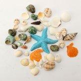 KiWarm 1 Zestaw w stylu śródziemnomorskim DIY Moda Plaża Mieszane muszle Mieszaj muszelki Naturalne wyroby rzemieślnicze do akwariów Wystrój akwarium
