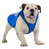 Pet Dog Summer Cool Vest Respirant Confortable Sunscreen Cooling Vêtements Veste Pet Pet Vest