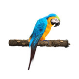 Natural Wooden Stand Stick for Pet Birds Parrots Standing Swing Chewing Bite Claw Grinding Perch Cage Toys Accessory