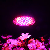 LED Bulb Grow Light E27 60W 2835 SMD Full Spectrum Plant Hydroponic Aquarium AC85-265V