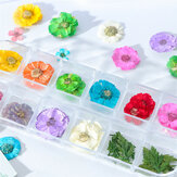 Mix Dried Flowers Nail Decoration Jewelry Natural Floral Leaf Stickers 3D Nail Art Designs Polish Manicure Accessories