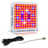 XANE® 100W LED Flor de estufa com espectro total de luz Planta Barraca de mudas de lâmpadas Lanterna EU / US