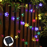 Solar Powered 7M LED Sakura Flower String Light Long Bright + Single Mode / 7 Modes Outdoor Garden Blossom Lamp