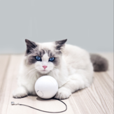 HomeRun Smart Interactive Pet Toys Automatic 360 Degree Self Rotating Ball Toys with Bell Built-In Spinning Eye-Protection LED Cat Toy From XiaoMi Eco-system