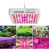 300W LED Grow Light Full Spectrum Hydro Veg Flower Plant Panel lamp medycznych