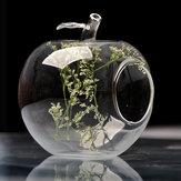Maçã forma de flor vaso de vidro do musgo eco garrafa micro paisagem