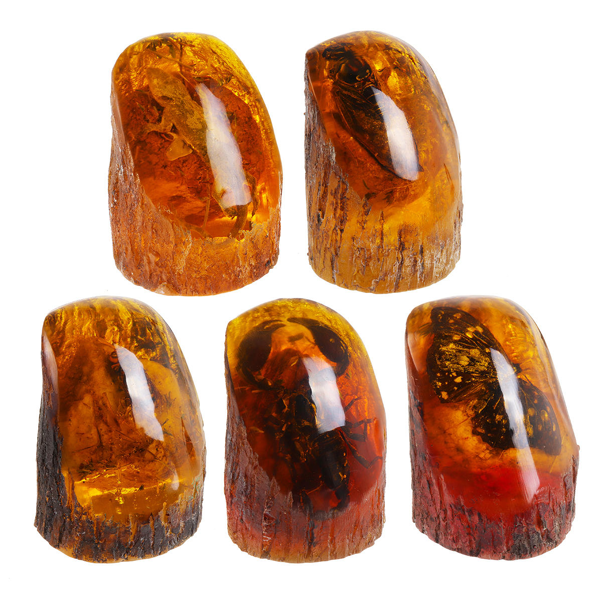 Amber King Butterfly Amber Fossil True Insect Specimens Decorations Crafts