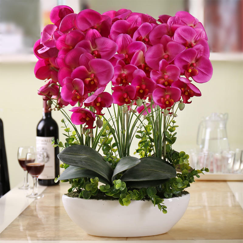Egrow 100Pcs Phalaenopsis Seeds Living Room Decoration Flowers Potted Plant Seed Home Garden