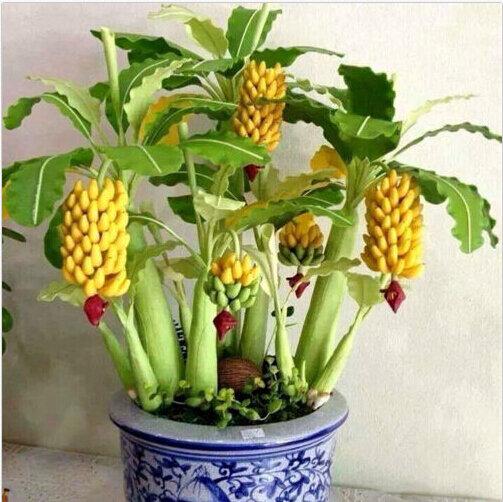 Egrow 30 Sztuk Karzeł Nasiona Bananów Bonsai Drzewo Tropikalne Nasiona Owoców Balkon Kwiat dla Roślin Domowych