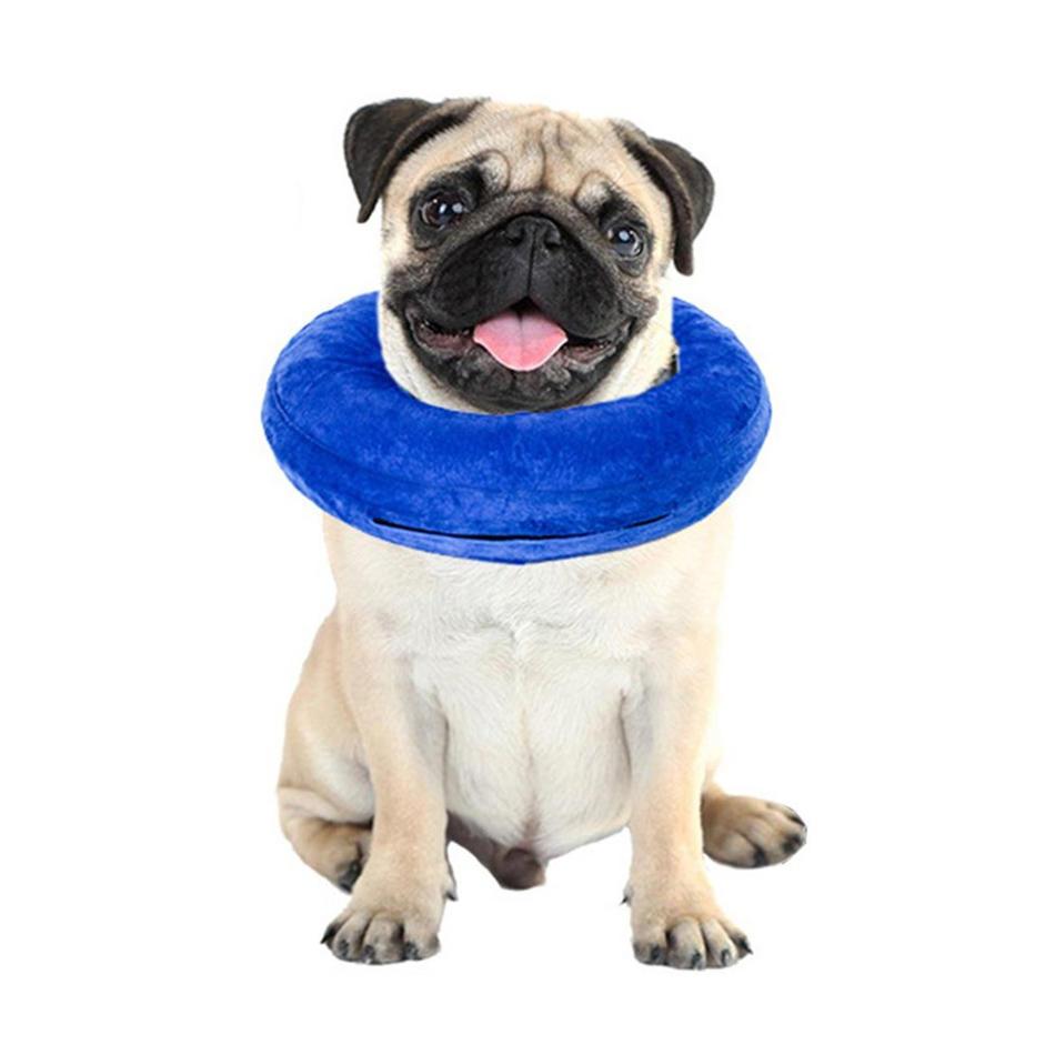 Collier de chien gonflable pour soigner la blessure d'un chat ...