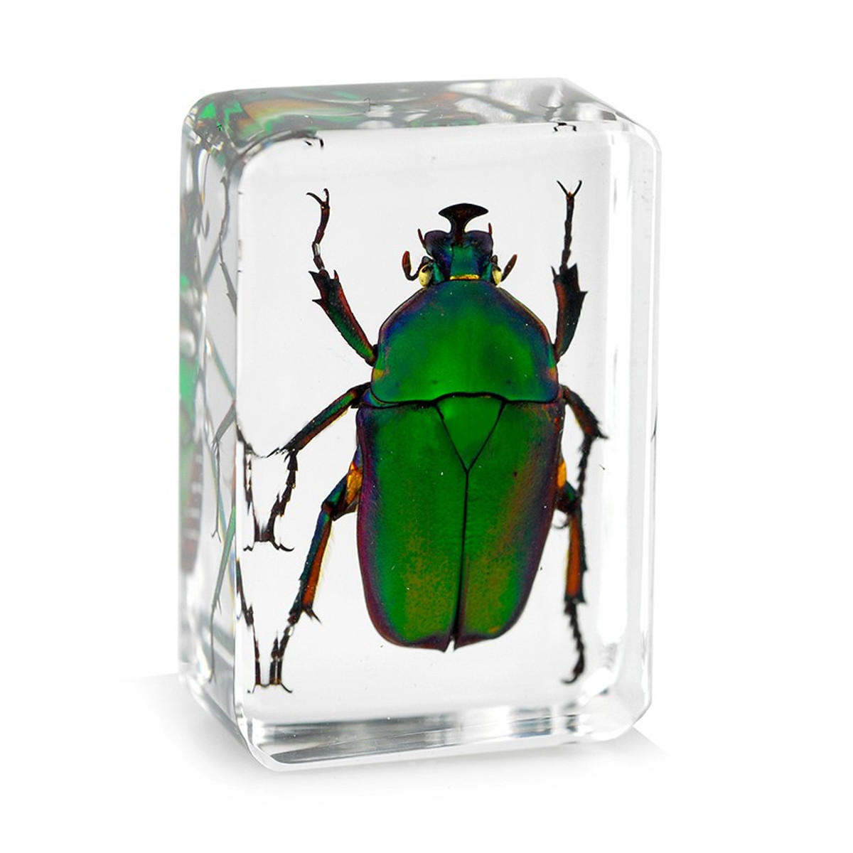 Transparent Insect Specimen Rose Chafer Beetle Animal Insect Display Specimen Educational Supply Biological Collection Pendant Necklace Decorations