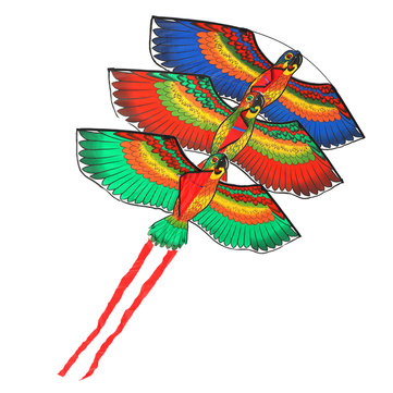 Buy Outdoor Beach Park Polyester Camping Flying Kite Bird Parrot Steady With String Spool For Adults Kids with Litecoins with Free Shipping on Gipsybee.com