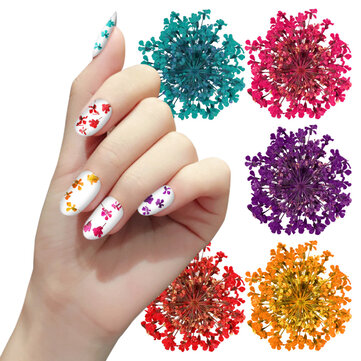 Buy 12 Color Nails Accessoires Truth Flower Nail Art Decoration 3D Dry Dried Flowers Stickers DIY Manicure Tools with Litecoins with Free Shipping on Gipsybee.com