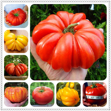 Egrow 100 Pcs/Bag Giant Tomato Seeds Plants Organic Heirloom Plants Vegetables Perennial Non-GMO Plant Pot For Home Garden Planting