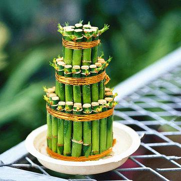 Egrow 30 PCS / Pack Beruntung Bambu Bonsai Benih Tanaman Pot Kecil Memurnikan Dracaena Plantas Sederhana untuk Taman Rumah